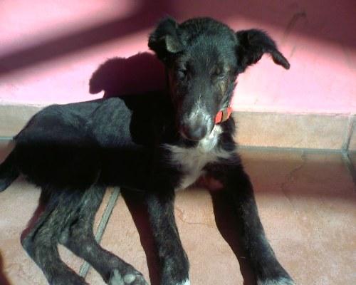 foto cachorrito de collar rojo perdido en el Terán
