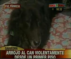 Abogado arroja a su perro desde un primer piso (Foto de Crónica TV)